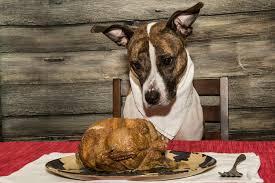 turkey napkin dog